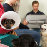 Post-Operative Care – Dogs and Cats