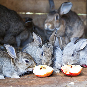 Treat your rabbit's sweet tooth
