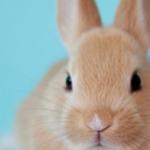 Rabbit Nutrition and husbandry