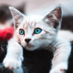 Kitten care advice from the team at Apex Vets