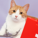 Learn what to do in a cat health emergency with Apex Veterinary Centre.