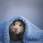 Advice from Apex Veterinary Centre on whether your small furry pet will hibernate.