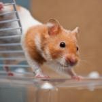 Apex Vets' nurses know the best pet toys & treats
