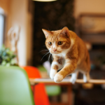 New year's resolutions for you & your cat from  Apex Veterinary Centre