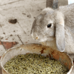 Glenn Hodgson warns about 21 foods not to feed your rabbit