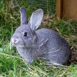 Glenn shares 11 rabbit health emergencies
