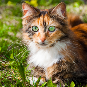 Chloe has some spring advice for spotting cat fleas