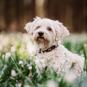 Head nurse Chloe Green has some important advice on worming dogs