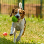 Share your pet stories with Apex Vets on social media