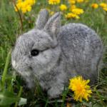 Apex Vets' list of poisonous plants for rabbits could save your pet