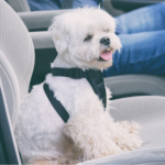10 steps to treating car sickness in dogs