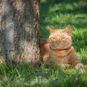 Ways to cool cats down in summer