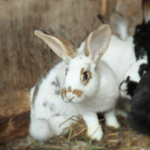 Flystrike in rabbits – fight it with our expert tips