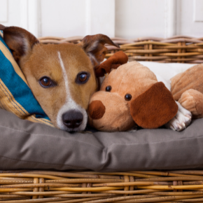 Apex Vets' tips on reducing separation anxiety in dogs