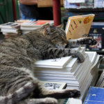 Apex Vets' top 10 books for animal lovers this Autumn