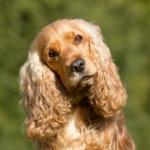 Raising awareness of pet diabetes in Denny